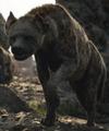 Azizi the Hyena