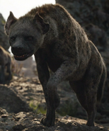 Azizi the Hyena