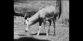 Bronyx Zoo Deer