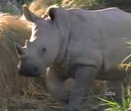 DAKTFA Rhino