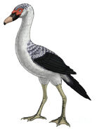 Presbyornis-an-extinct-genus-vitor-silva