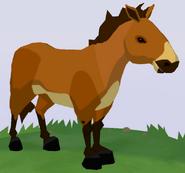 Przewalski's Horse WOZ