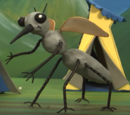 Ribbits-riddles-mosquito