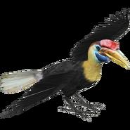 ZT Salawesi Hornbill 2