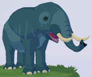 African Forest Elephant WOZ