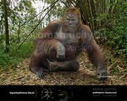 Gigantopithecus by rom u-db14aba