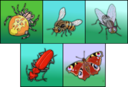 Insects erinv