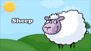 KLV Sheep