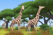 LTWR Rothschild Giraffe
