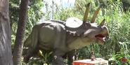 San Antonio Zoo Triceratops