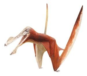 Uktenadactylus