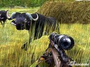 Cabela's Buffaloes