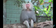 Cleveland Metroparks Zoo Baboon