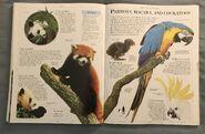 DK Encyclopedia Of Animals (126)