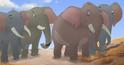Elephant TLG