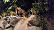Rolling Hills Zoo Baboons