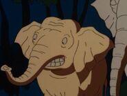 TWT Indian Elephant