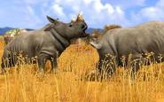 WP3 White Rhinoceros