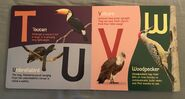 ABC Birds (American Museum of Natural History) (7)