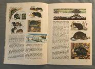 A Golden Exploring Earth Book of Animals (8)