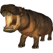 Hexaprotodon sivalensis (Lazardi) 1.png