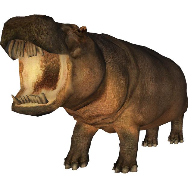 Hexaprotodon