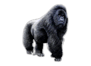 Inkart Gorilla