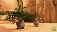 JungleBunch-Moles