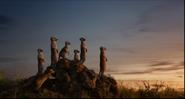 TLK 2019 Meerkats