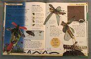 DK First Animal Encyclopedia (53)