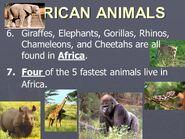 Giraffes Elephants Lions Chameleons Leopards Zebras Hippos Rhinos Gorillas