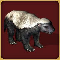 Cape Honey Badger