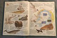 The Animal Atlas (1)