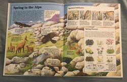 Usborne World Wildlife- Mountain Wildlife (13).jpeg