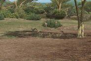 20 nile crocodol hunt