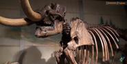 CMONH Mammoth