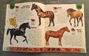 Horse Dictionary (2)