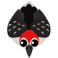 Mopeio Woodpecker