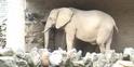 Phelidelphia Zoo Elephant