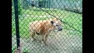 Seneca Park Zoo Hyena