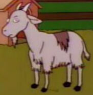 Simpsons Goat