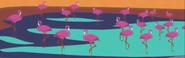 South Park Flamingos