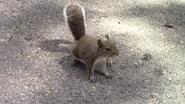 Zoo Miami Squirrel