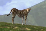 Afrika cheetah by linconnu24-d3ckgk7