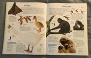 DK Encyclopedia Of Animals (82)