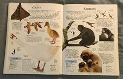 DK Encyclopedia Of Animals (82).jpeg