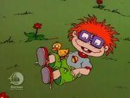 Herbert the Duckling waddling on Chuckie, tickling him