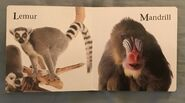 James Balog's Animals A to Z (7)