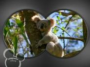 Little Einsteins Koala
