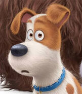 Max in The Secret Life of Pets